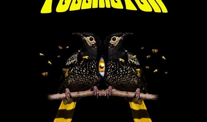 Pollinator - Honeyeater
